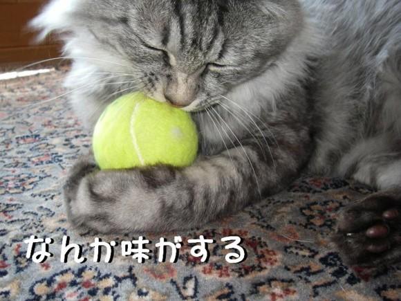 f:id:buhi84shin:20110426220752j:image:right