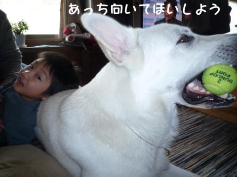 f:id:buhi84shin:20110427154020j:image:left