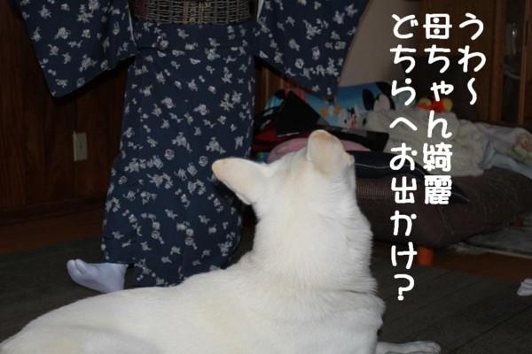 f:id:buhi84shin:20110429082406j:image:right
