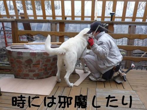 f:id:buhi84shin:20110429140318j:image:right