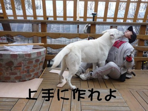 f:id:buhi84shin:20110429140322j:image:left