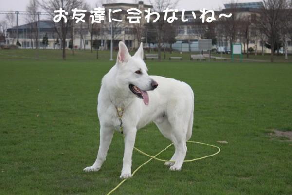 f:id:buhi84shin:20110430175719j:image:left