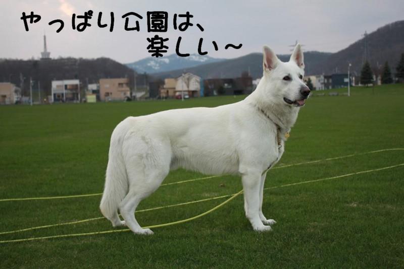 f:id:buhi84shin:20110430180611j:image