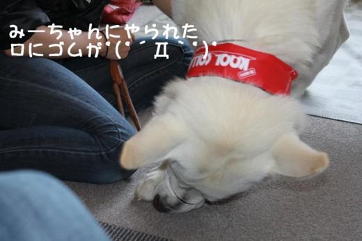f:id:buhi84shin:20110702132810j:image:right