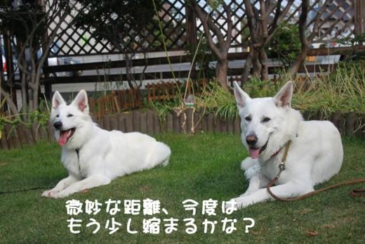 f:id:buhi84shin:20110702154140j:image:right