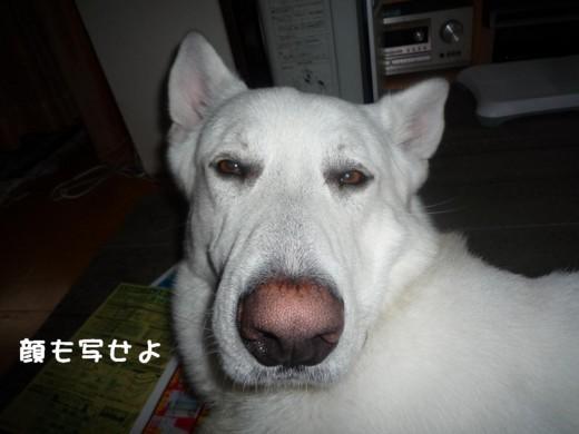 f:id:buhi84shin:20110708071751j:image:left
