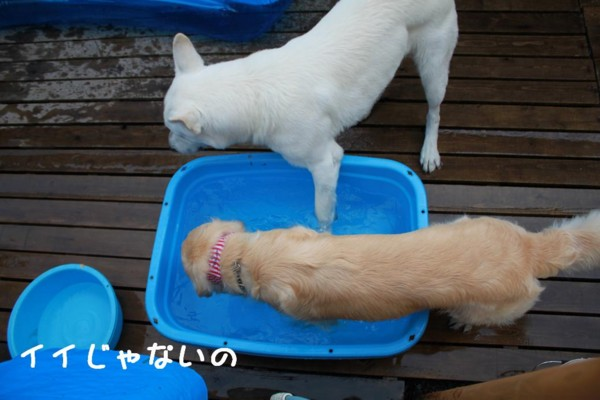 f:id:buhi84shin:20110710180359j:image:left