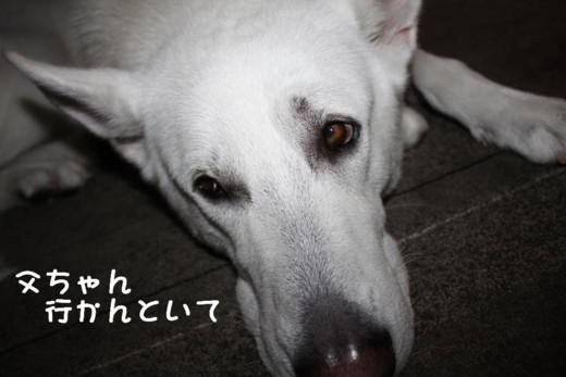 f:id:buhi84shin:20110714072900j:image:right