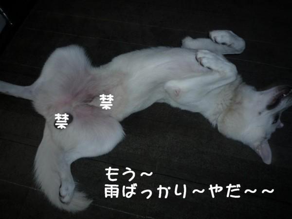 f:id:buhi84shin:20110716090916j:image:w640:left