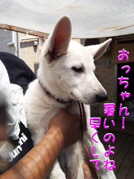 f:id:buhi84shin:20110717105625j:image:right