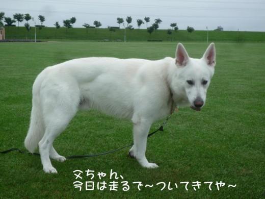 f:id:buhi84shin:20110718064626j:image:right