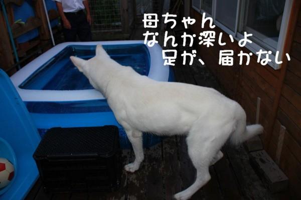 f:id:buhi84shin:20110719191254j:image:left