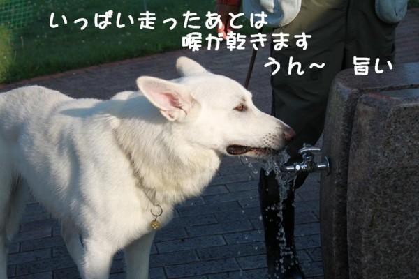 f:id:buhi84shin:20110721061932j:image:left