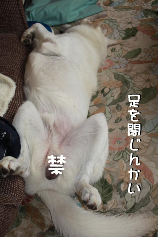 f:id:buhi84shin:20110728143002j:image:left