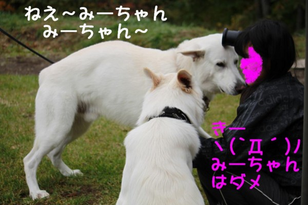 f:id:buhi84shin:20111015104843j:image:left