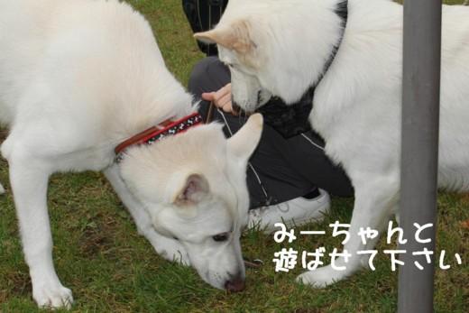 f:id:buhi84shin:20111015104848j:image:right