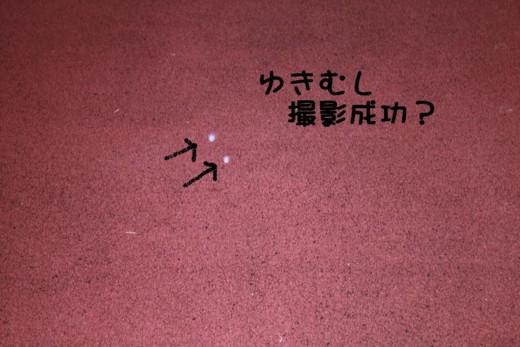 f:id:buhi84shin:20111016065205j:image:left