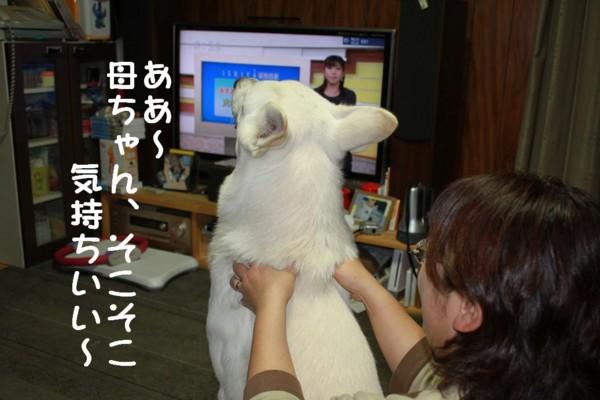 f:id:buhi84shin:20111020184640j:image:left