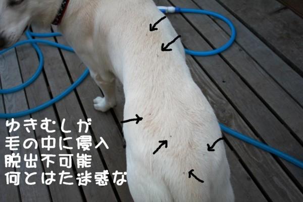 f:id:buhi84shin:20111021161051j:image:left