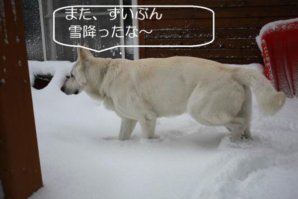 f:id:buhi84shin:20120404221612j:image