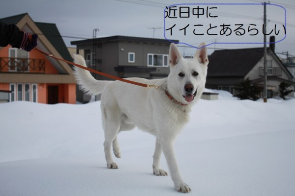 f:id:buhi84shin:20120407210316j:image