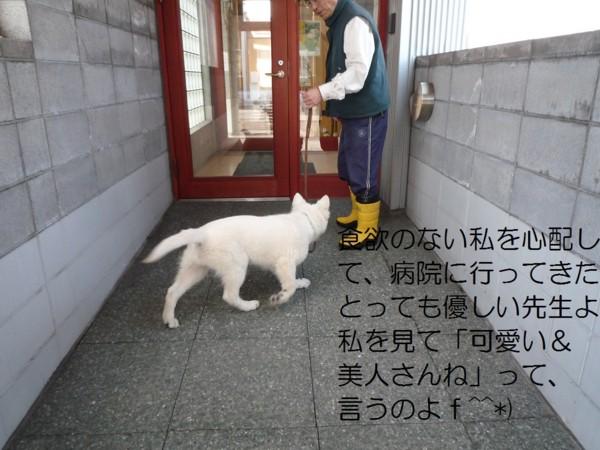 f:id:buhi84shin:20120414205748j:image