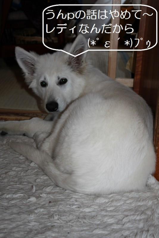 f:id:buhi84shin:20120422085023j:image