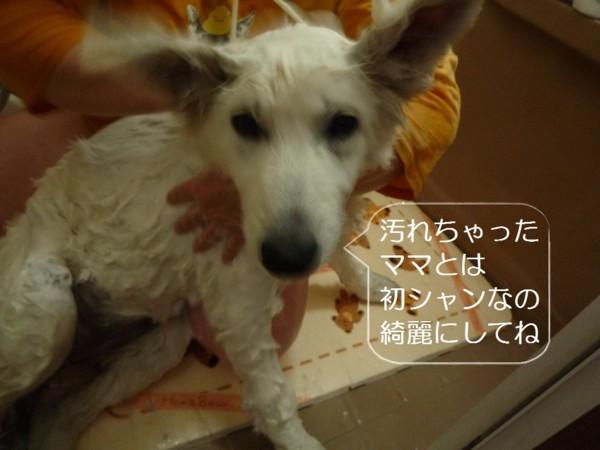 f:id:buhi84shin:20120423193246j:image