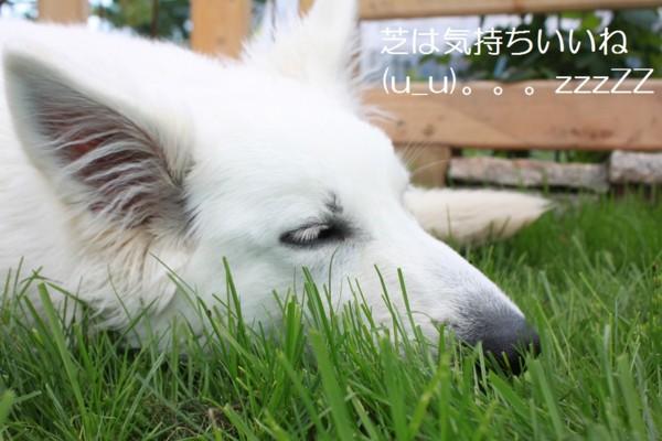f:id:buhi84shin:20120610220732j:image