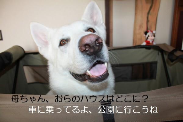 f:id:buhi84shin:20120610221807j:image