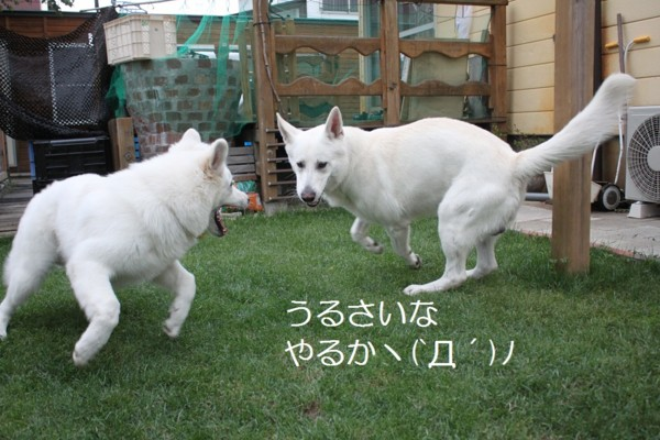 f:id:buhi84shin:20120703211004j:image