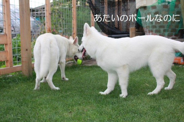f:id:buhi84shin:20120703211006j:image
