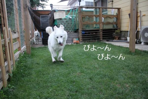 f:id:buhi84shin:20120703211632j:image