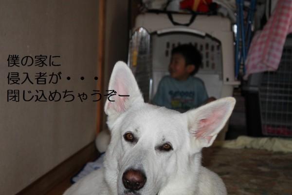 f:id:buhi84shin:20120704215934j:image