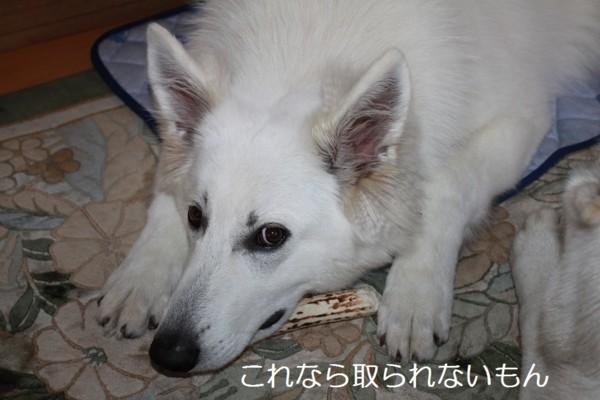 f:id:buhi84shin:20120706221004j:image