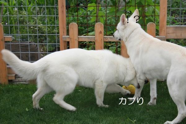 f:id:buhi84shin:20120709230334j:image