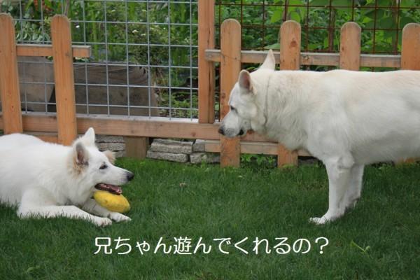 f:id:buhi84shin:20120709230336j:image