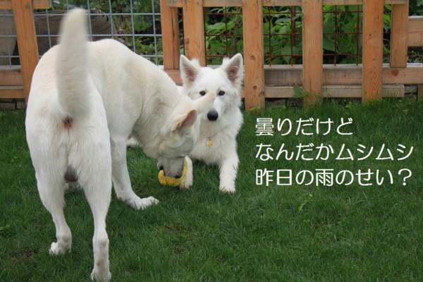 f:id:buhi84shin:20120709230337j:image