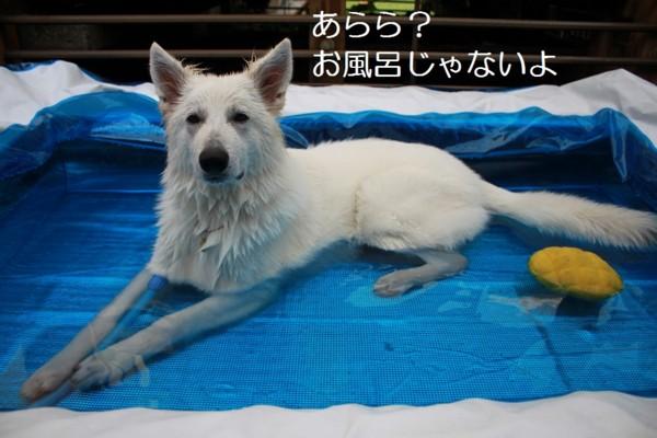 f:id:buhi84shin:20120711215016j:image