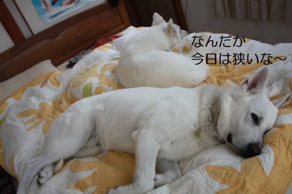 f:id:buhi84shin:20120714214422j:image