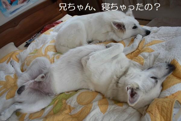 f:id:buhi84shin:20120714214425j:image