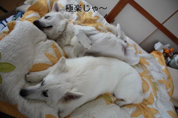 f:id:buhi84shin:20120714214427j:image