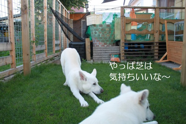 f:id:buhi84shin:20120714220456j:image