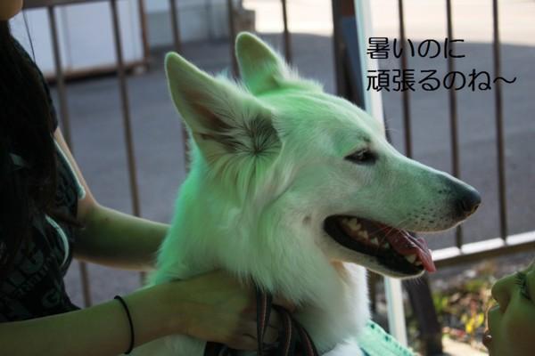 f:id:buhi84shin:20120715222105j:image