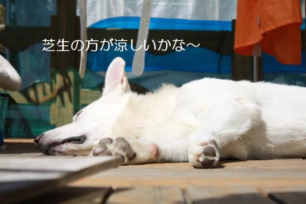 f:id:buhi84shin:20120717211907j:image