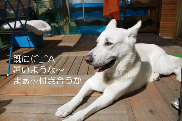 f:id:buhi84shin:20120717211908j:image