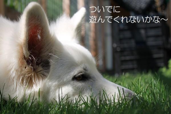f:id:buhi84shin:20120717213323j:image