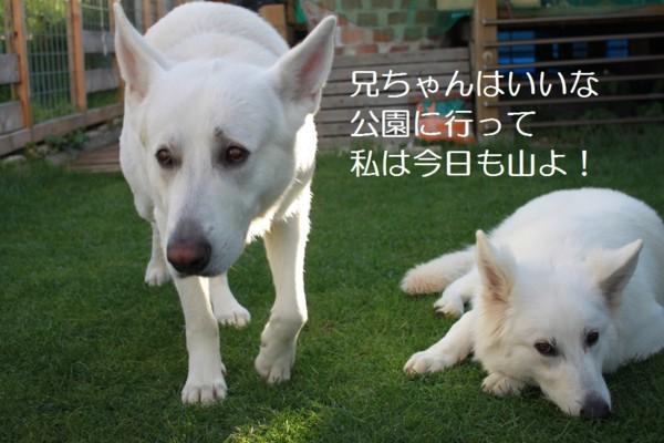 f:id:buhi84shin:20120720205547j:image