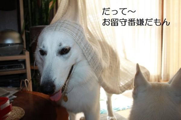 f:id:buhi84shin:20120722204611j:image