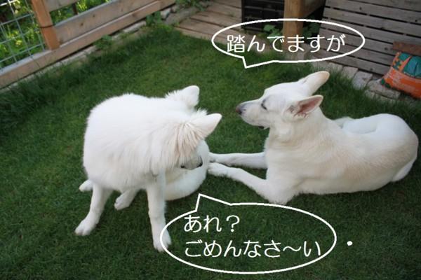 f:id:buhi84shin:20120724211430j:image